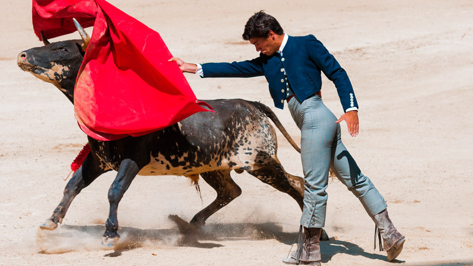 Bullfighter in a bullfight. Spain