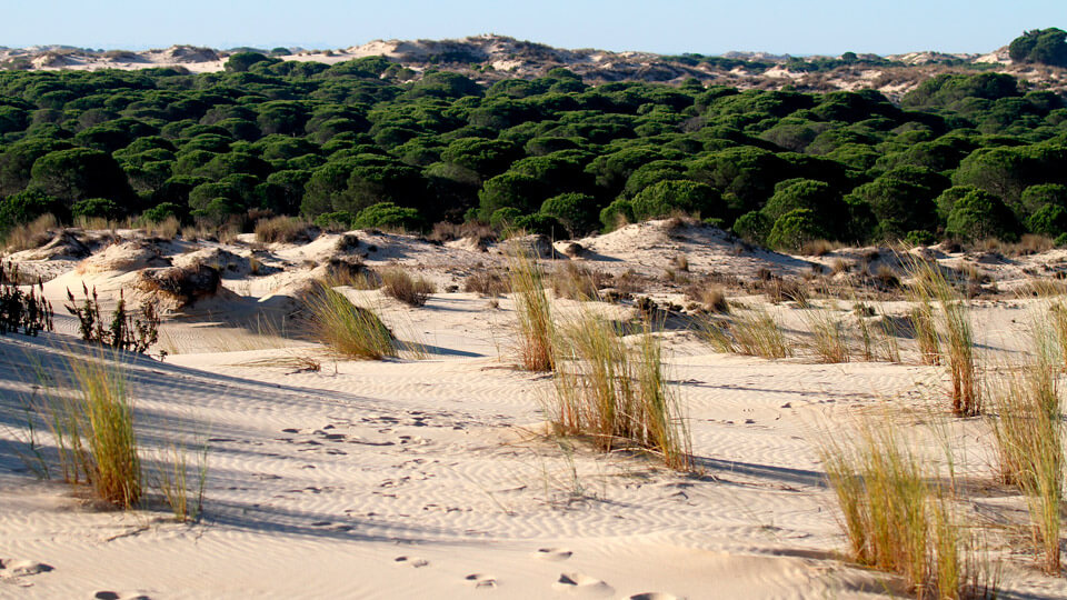 Doñana National Park, UNESCO Natural site